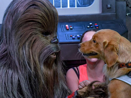 This service dog had the cutest reaction when meeting Chewbacca