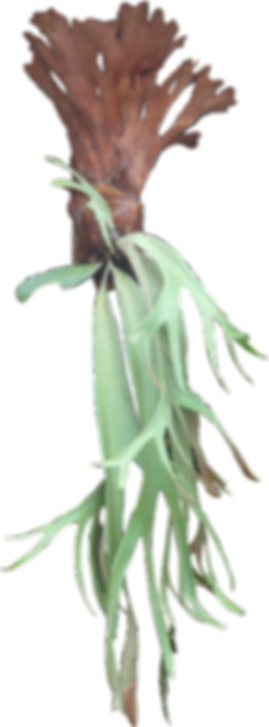personal_assistant_plant.png