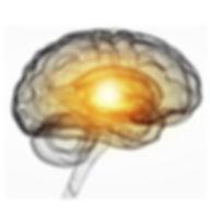 Brain image 1b.jpg