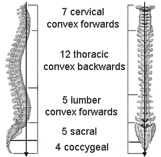 Spine AP and Lat.PNG