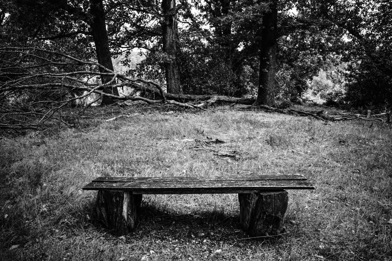 Lueneburger-Heide-WB-20200829-006.jpg