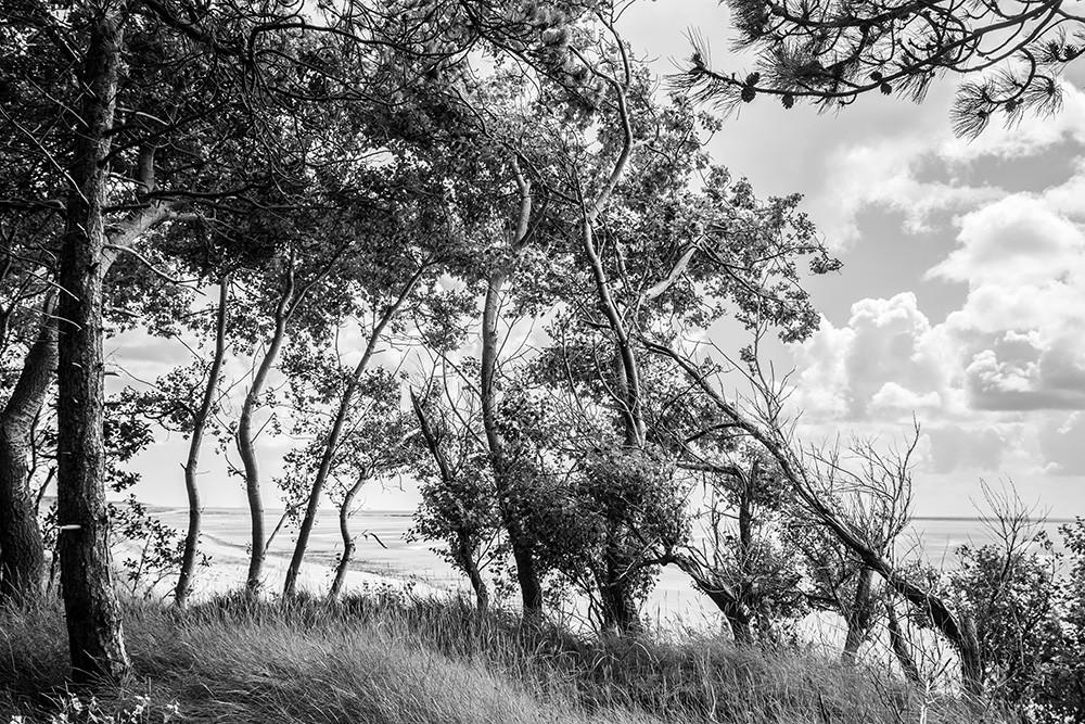 Satz5-Uferwald.jpg