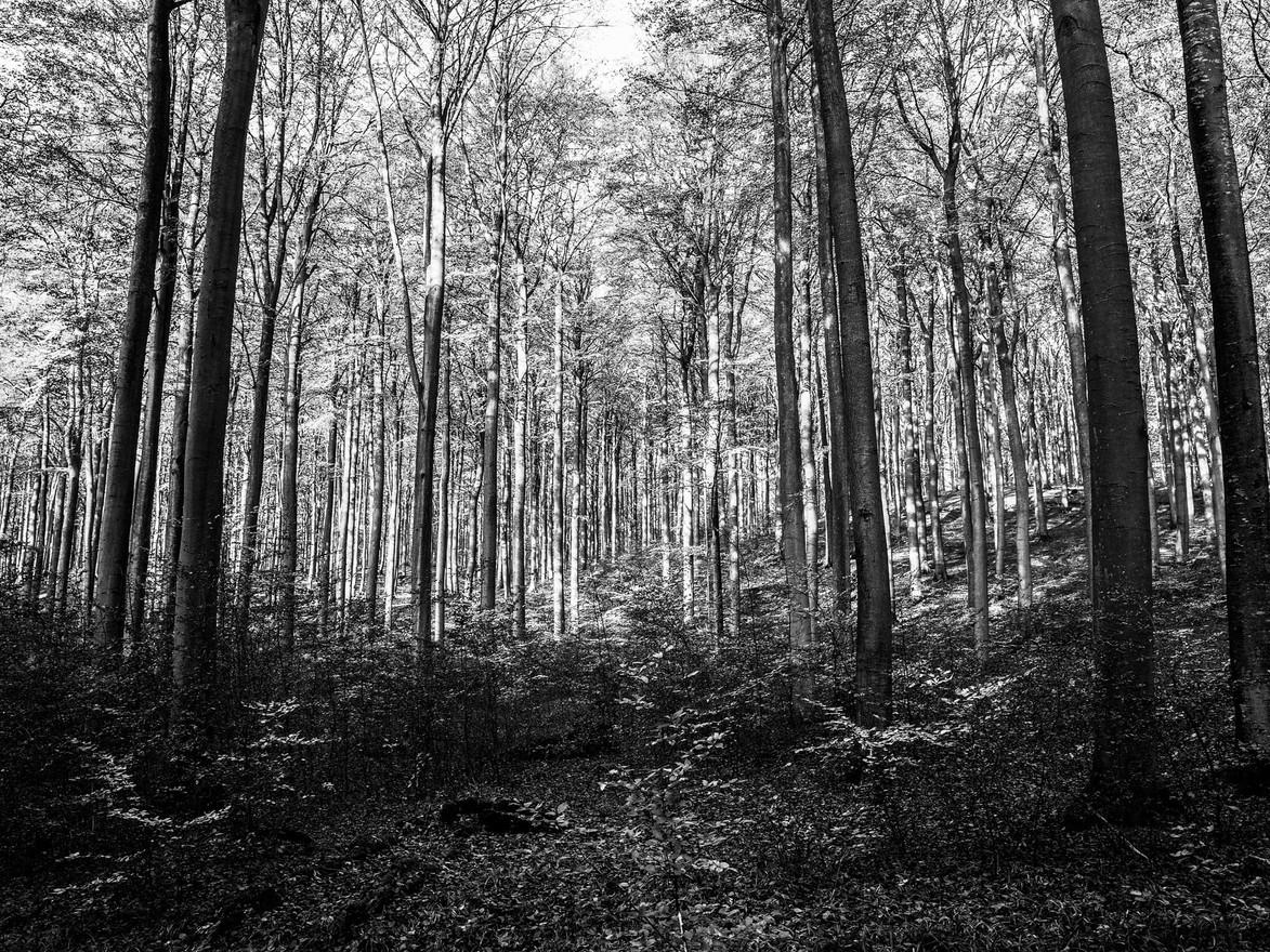 Nationalpark-Jasmund-WB-20181107-025.jpg