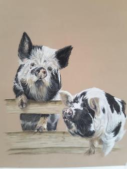 Pigs_01.jpg