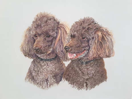 Dogs_04.jpg