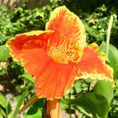 gardenPure02.jpg