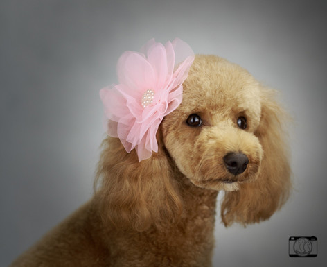Loving Pet Studio Photo Production