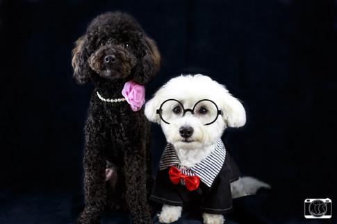 Loving Pet Studio Photo Production