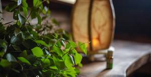 Luonnottaren sauna
