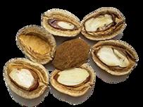Semi di Mango - Ingrediente di ZEN Shape Jeunesse - JTEAM Network