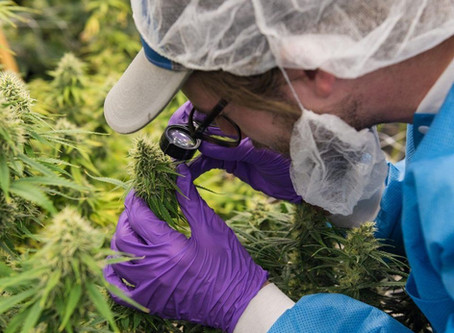Cannabis Industry Delivers 100,000+ Jobs And Billions In Tax Revenue by 5/22/18