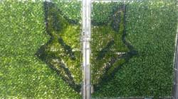Muros Verdes-Cetys (2)