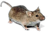 Mouse_white_background.png
