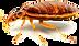 bedbug.png