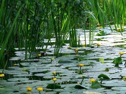 water-flowers-1118664_960_720