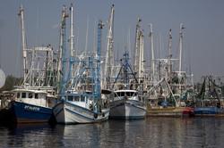 shrimp-boats-821360_960_720