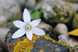 blossom-1375584_960_720