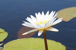 flower-290424_960_720