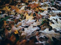 leaves-933040_960_720