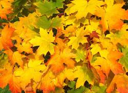 leaves-57427_960_720