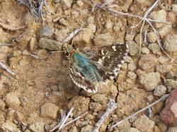 butterfly-953931_960_720