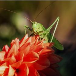 grasshopper-480502_960_720