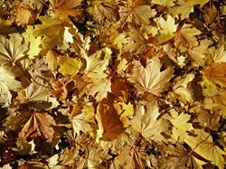 leaves-1030954_960_720