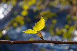 leaf-1359023_960_720