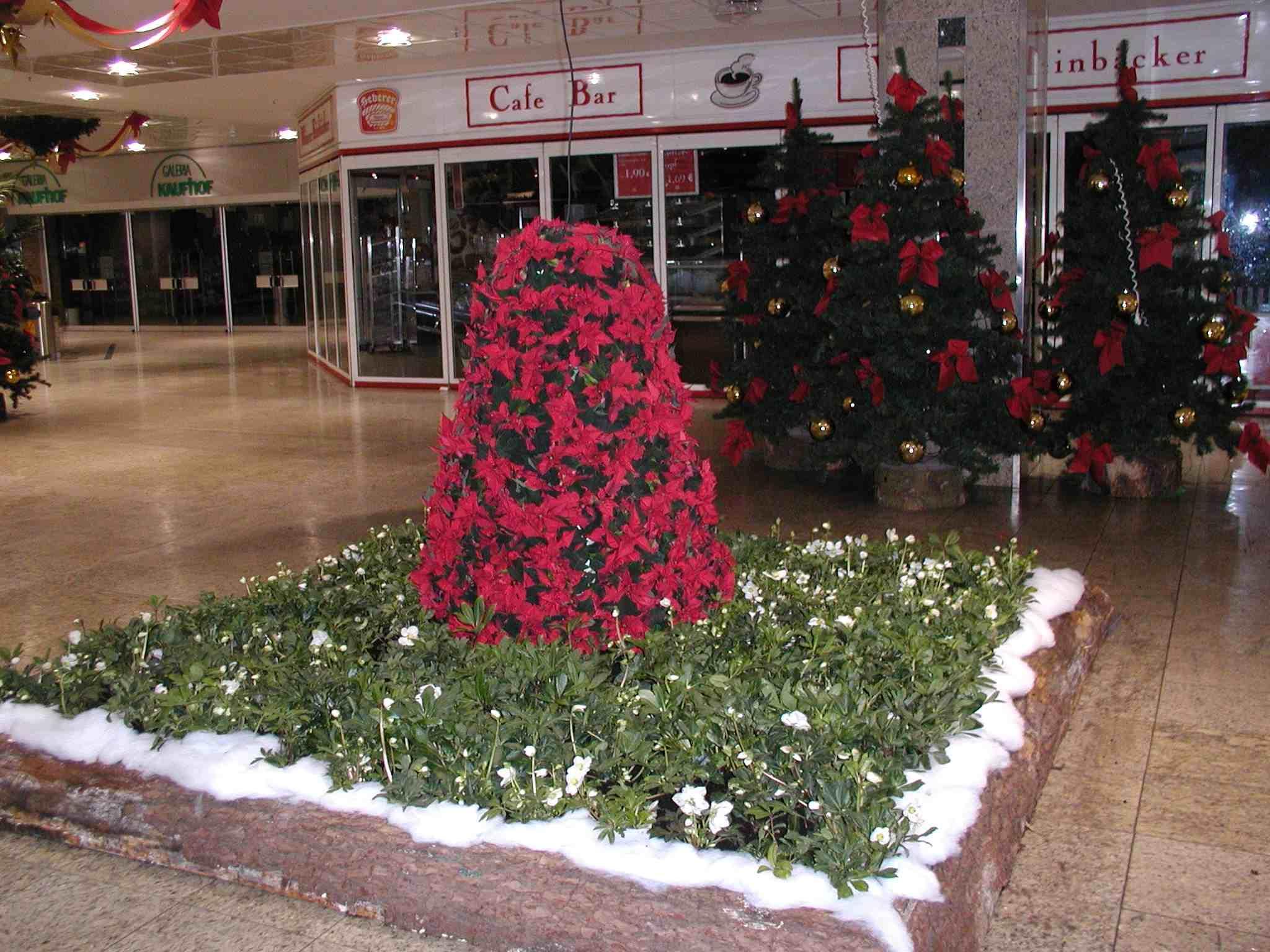 weihnachtliche Bepflanzung