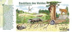 Raubtiere des Wald