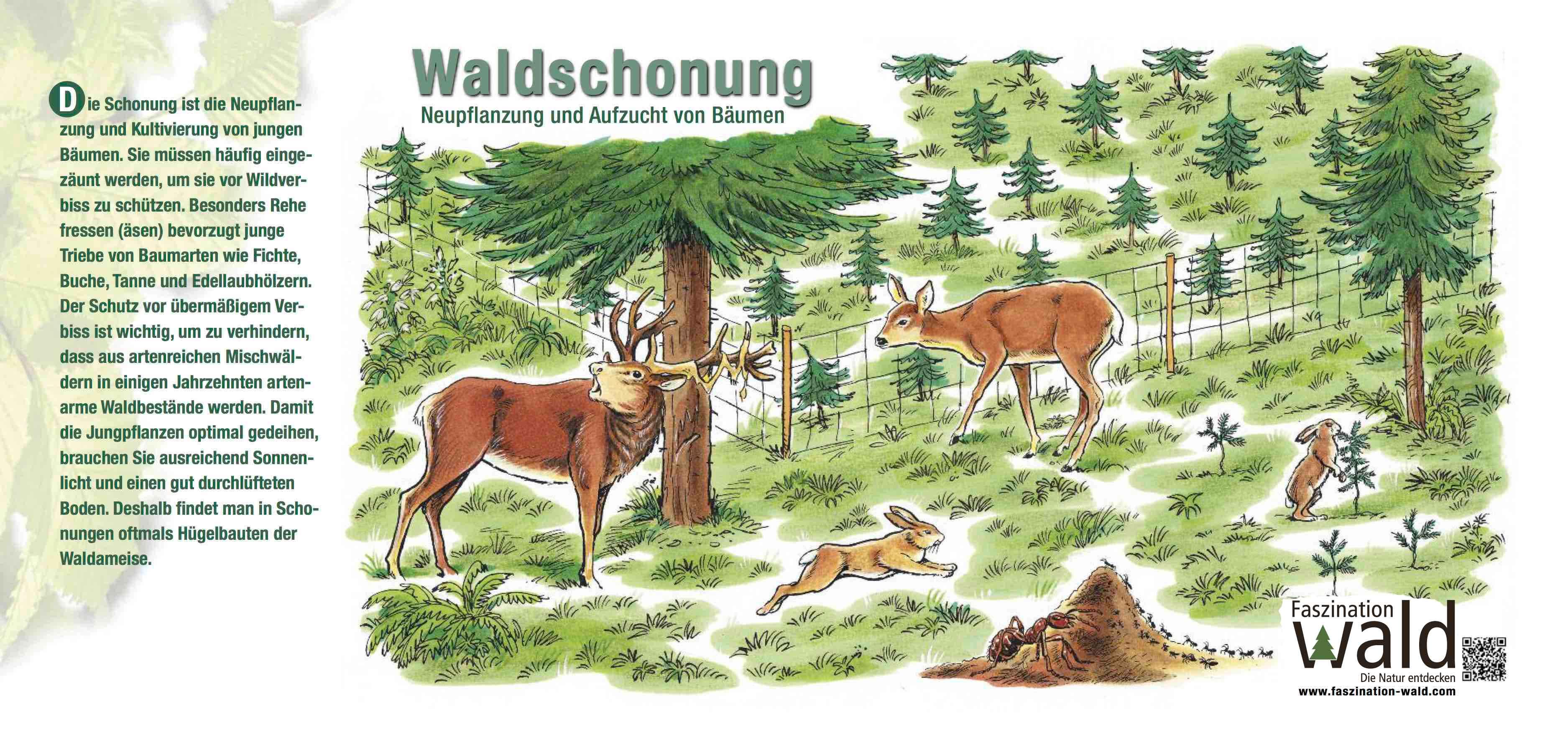 Waldschonung