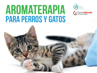 Aromaterapia_Flyers_¼_(Frente).png