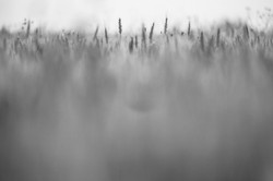 Blurred Meadow