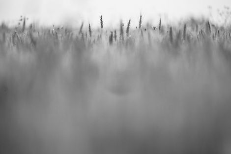Prairie brouillée