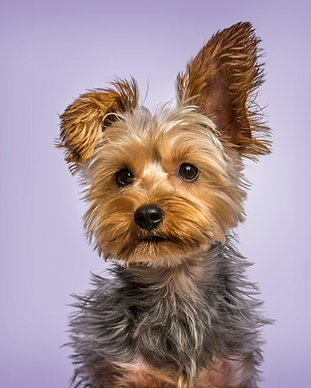Copy of Dog images  (1).png