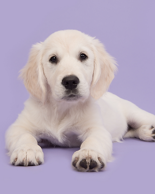 Copy of Dog images  (2).png