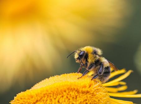 Amazing, precious, magical honey bees!