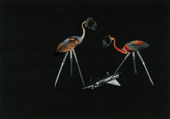 Birds and Plane