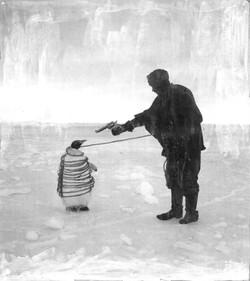 Arrested Penguin