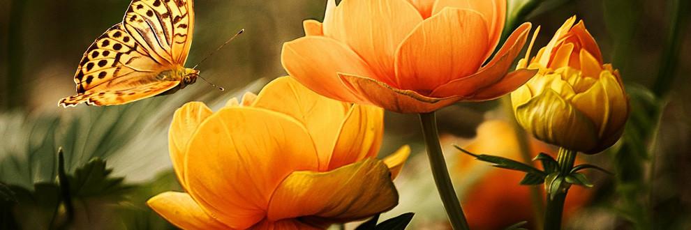 Orange, die Farbe für Aktivität und Energie