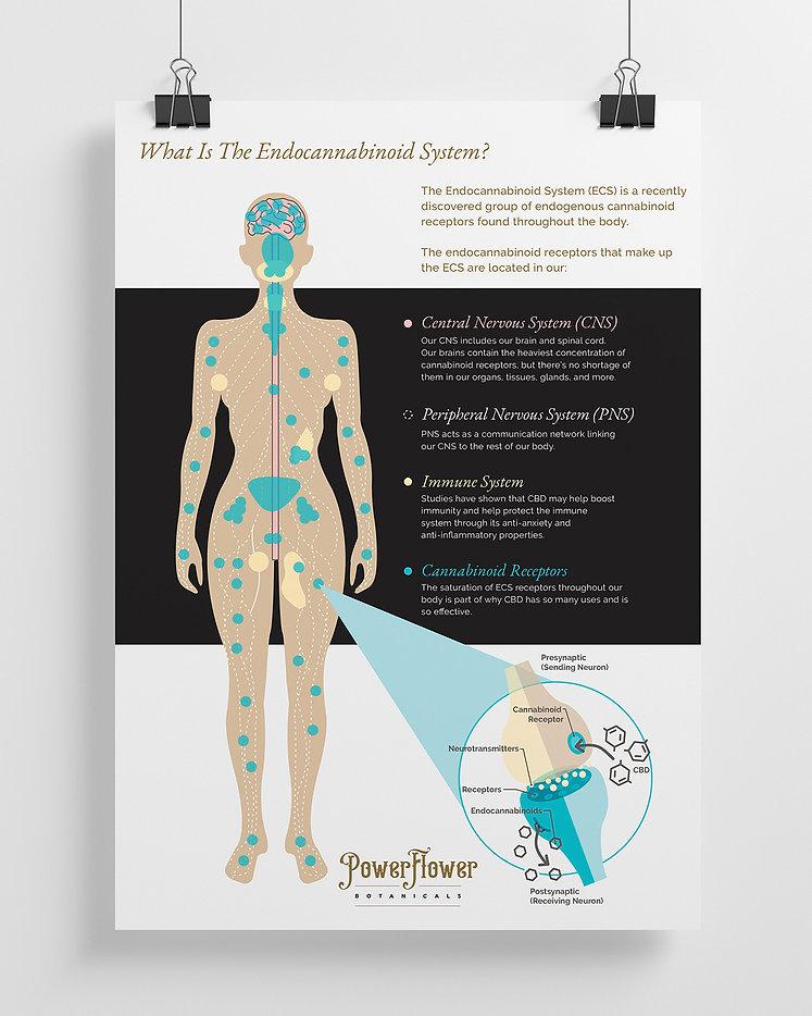 pf_whatiscannabinoid_blog_sm.jpg