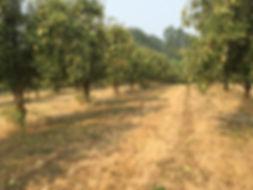 omega farm.jpg