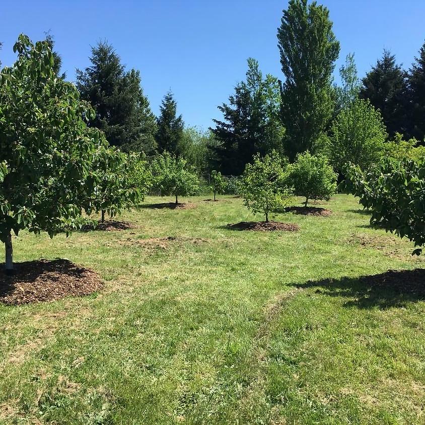 Winter Orchard Care Series: Healthy Homeland