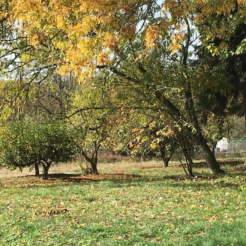 Winter Orchard Care Series: Curtin Springs Community Orchard