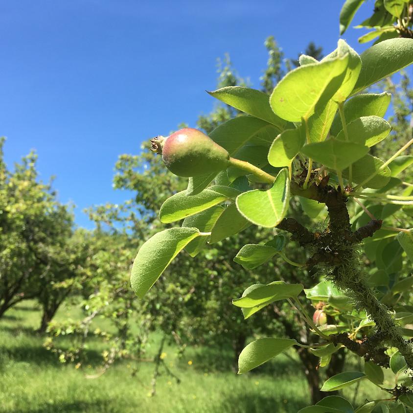 Summer Pruning Workshop at Healthy Homeland