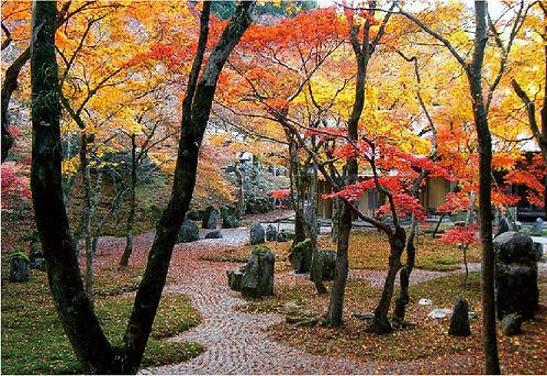光明禅寺.jpg