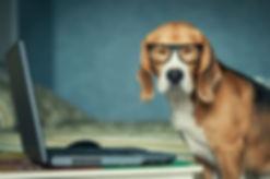 Sleepy beagle dog in funny glasses near