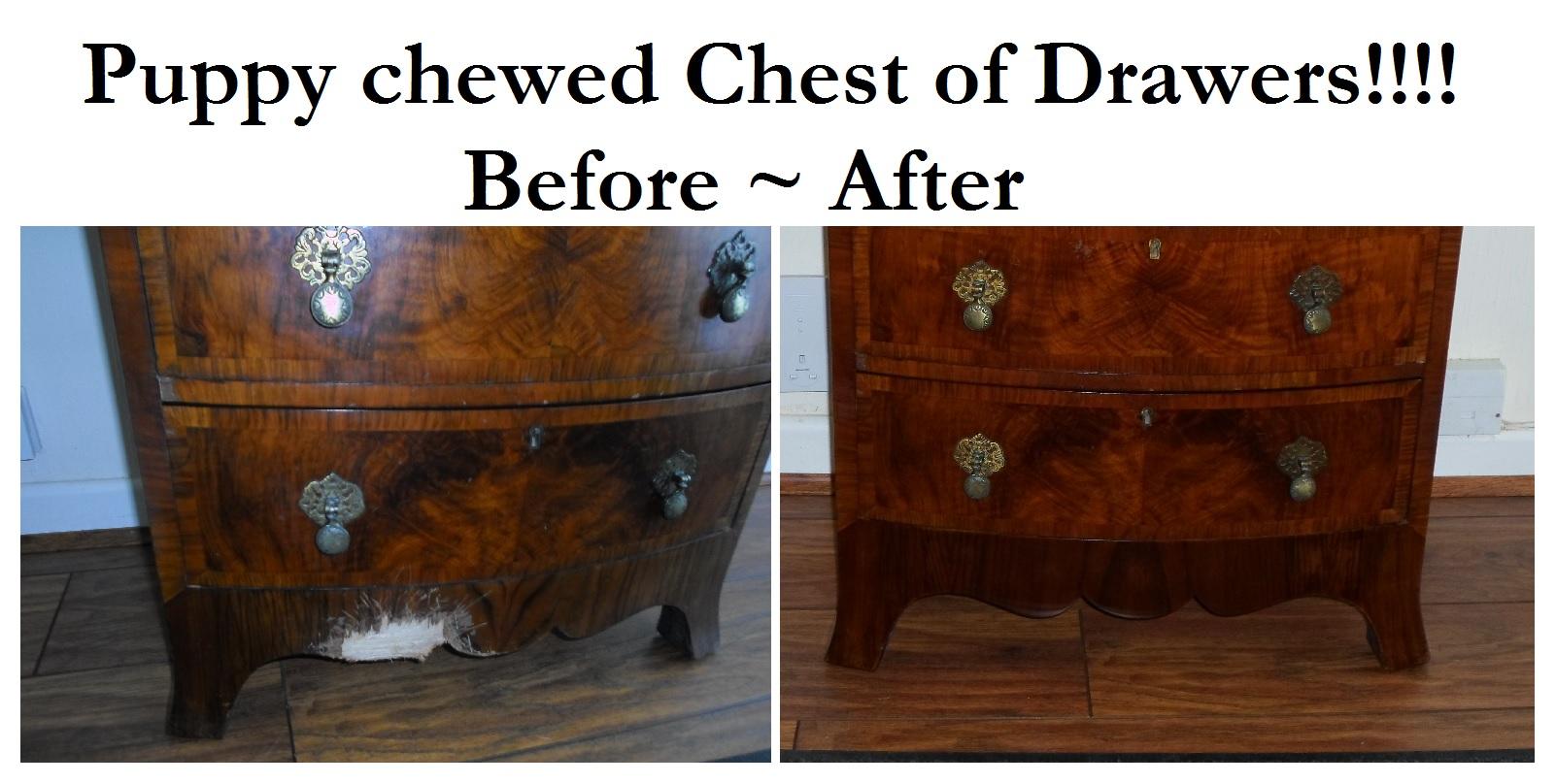 Puppy chewed chest