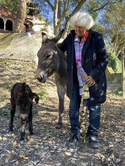 Rosina con Ronzinante e Platero appena nato