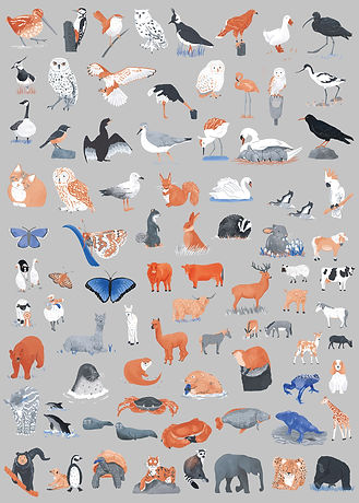Animal icons for an illustrated map. Illustration icons of mammals, birds, sea creatures and reptiles.